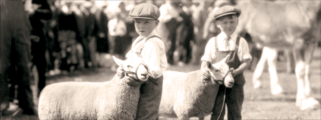 Twins Boyd and Lloyd Ayre exhibit twin sheep at an Oshawa, Ont., fair in 1930. [PHOTO: ARCHIVES OF ONTARIO—RG 16-274, ALBUM 2]