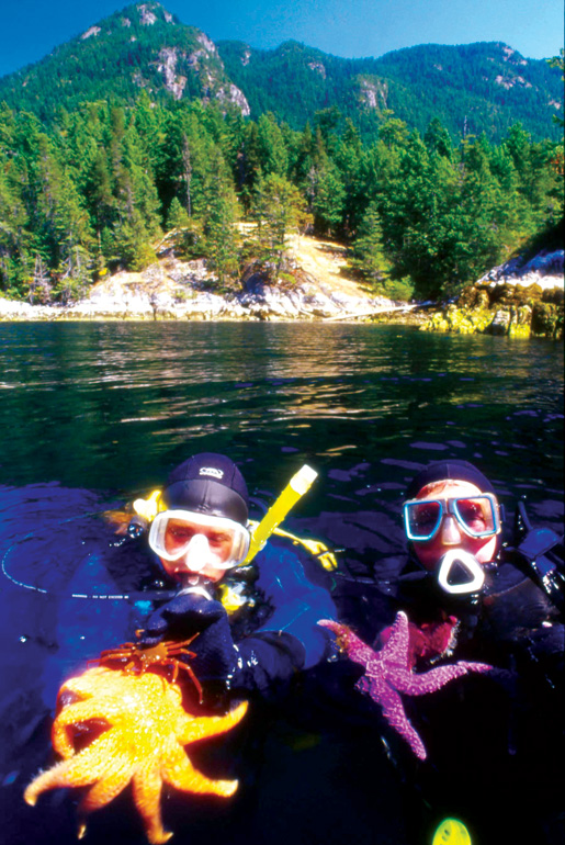 Divers find starfish. [PHOTO: VANCOUVER, COAST & MOUNTAINS, GRAHAM OSBORNE]
