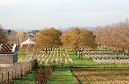 Coriano Ridge War Cemetery. [PHOTO: TOM MacGREGOR]