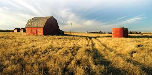Golden prairie. [PHOTO: ©iStockphoto/fremme]