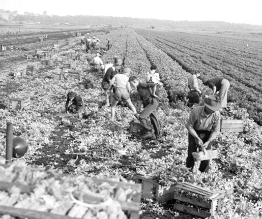 Members of the Ontario Farm Service Force at work, 1941. [PHOTO: ARCHIVES OF ONTARIO]