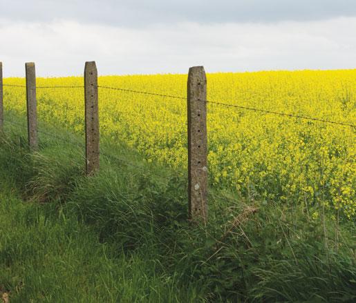 A farmer's field on the Somme. [PHOTO: DAN BLACK]