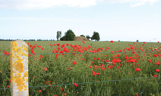 Poppies grow at the edge of a wheat field behind Beny-sur-Mer Canadian War Cemetery. [PHOTO: SHARON ADAMS]