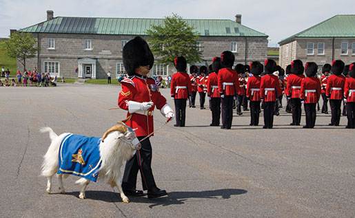 The Tibetan goat Baptiste X participates in the changing of the guard ceremony at the Citadelle in Quebec City. [PHOTO: TOM MacGREGOR]