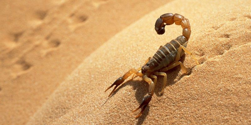 Smoking dead scorpions and the Taliban spring offensive