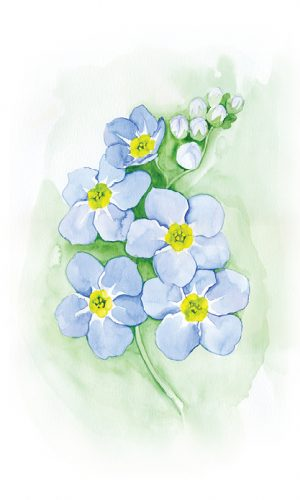 Forget-Me-Not Small Prints1