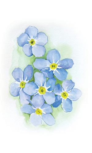 Forget-Me-Not Small Prints3