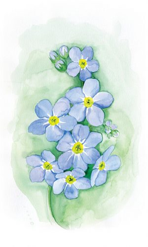 Forget-Me-Not_Small_Prints2