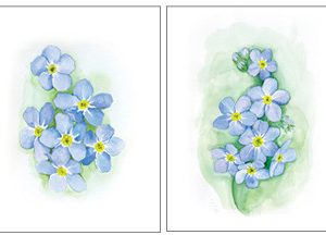 ForgetMeNot_DuoV1_Large_and_Small