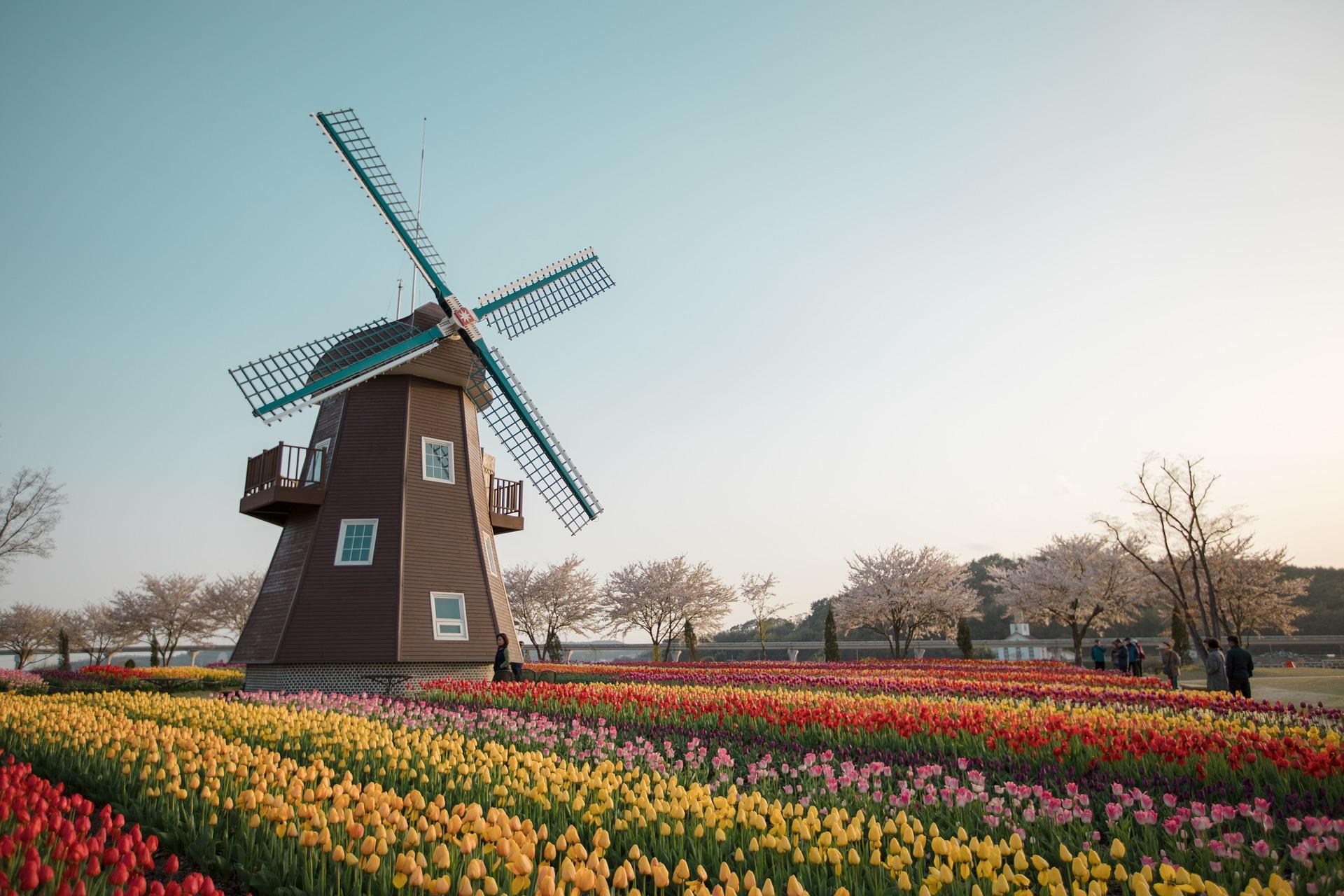 Dutch appeal for help in building online memorial
