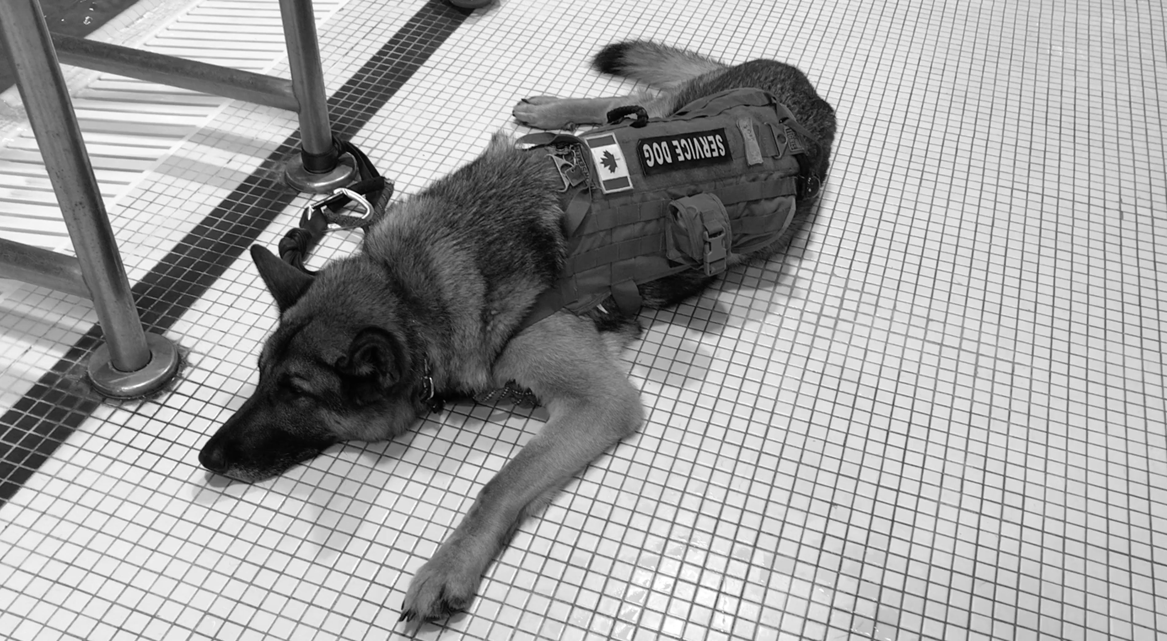 Standards for service dogs are overdue