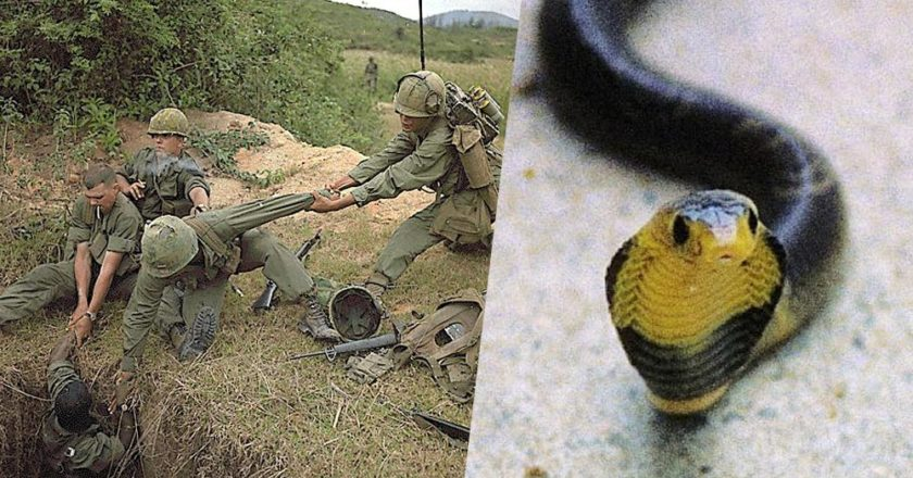 Snakes on a chopper: Vietnam vets tell harrowing serpentine tales
